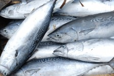 Kea Gastronomy Food Fish